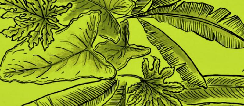 folhas de embalar comida